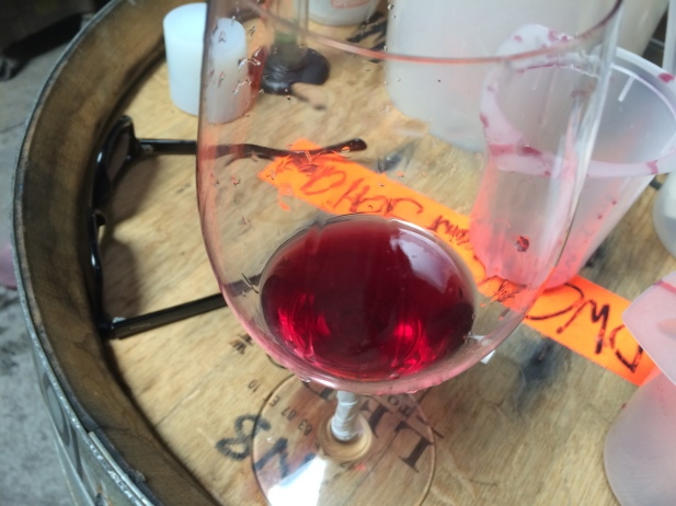 Translucent Pinot noir, 2014 Vincent Crowley Station Vineyard